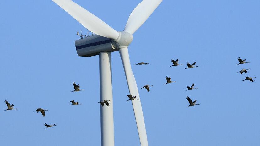Welche Windkraft-Kritiker, die 'Vogel' rufen, falsch liegen