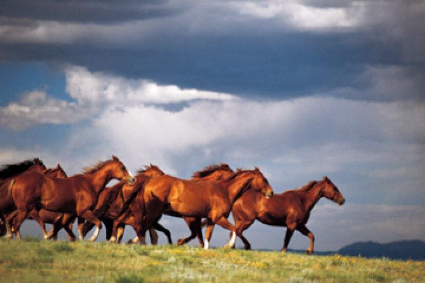 馬に乗ってワインカントリーをツアーする方法