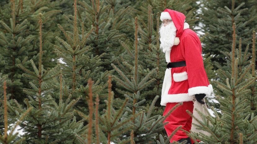 クリスマスツリーはどのように形を整えますか?