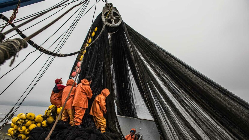 workers removing nets