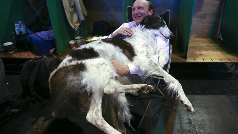The Greyhound-like Borzoi Can Take Down a Wolf — Plus More Unique Dog Breeds