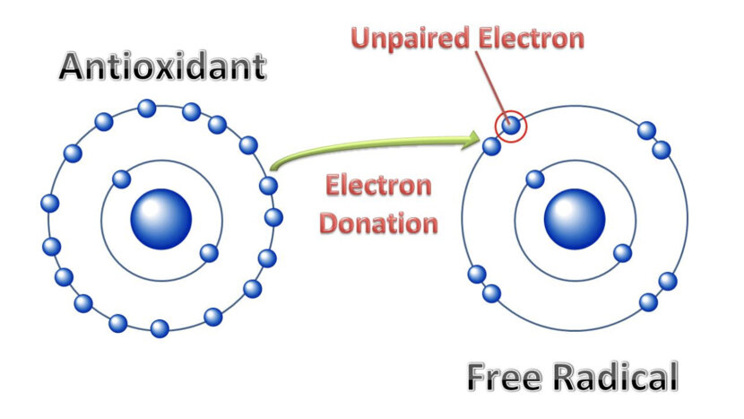 How Free Radicals Affect Your Body | HowStuffWorks