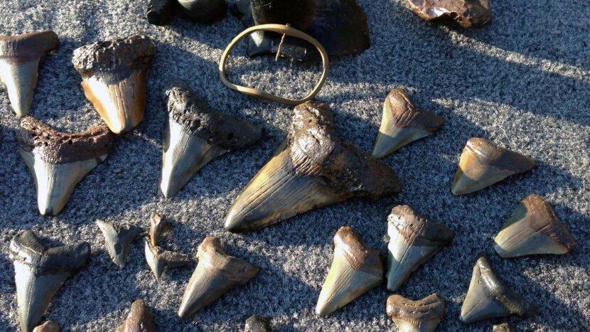 shark's teeth cache