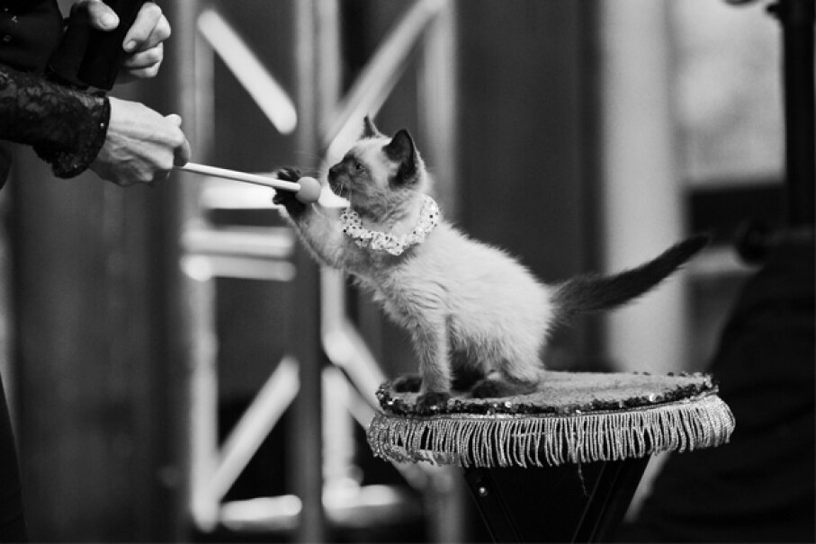 Believe it or not, cats have proven to be reliable (and agreeable) circus talent. Jenny Anderson/Getty Images