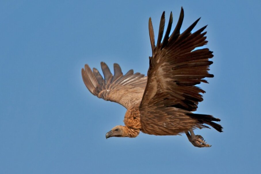 It turns out this seemingly paranormal event may have been nothing more than vulture hork. © MarieHolding/iStockphoto