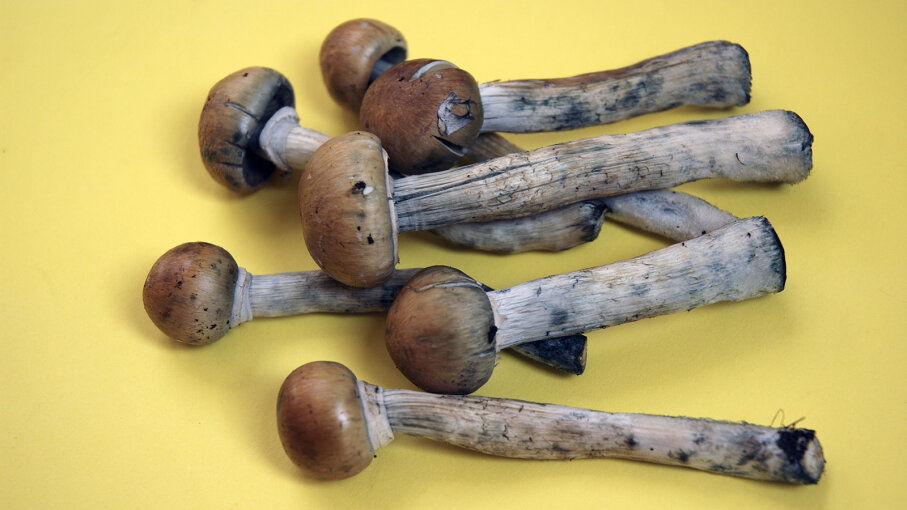 Magic mushrooms on sale