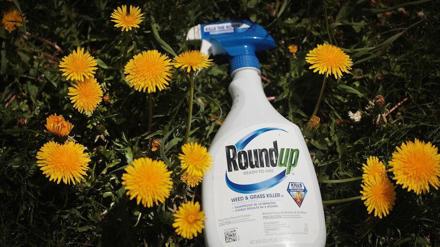 Roundup and plants
