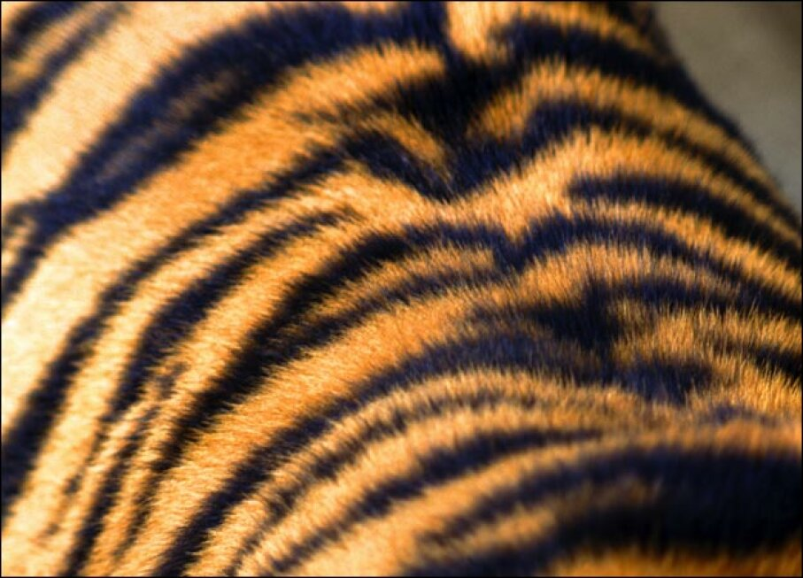 All about Tigers DCL   John Foxx/Getty Images