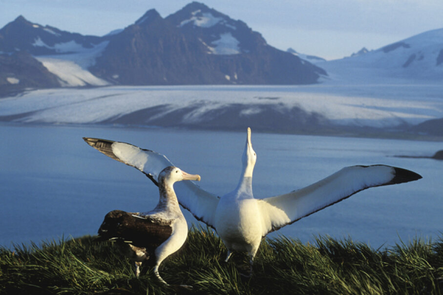Depending on the context, an albatross can signify good or bad luck according to superstition. Auscape/Getty Images