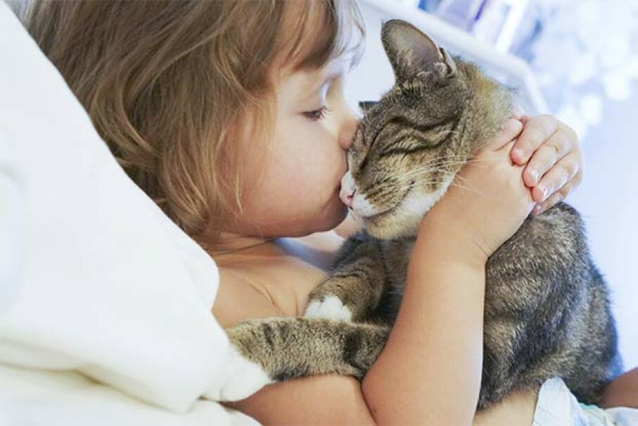 Anyone who's owned a cat knows they do love to be cuddled -- but on their terms. ehaurylik/iStock/Thinkstock