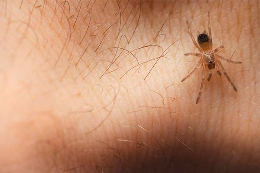 Spiders don't have reason to bite you -- they don't suck blood and mainly eat insects. skydie/iStock/Thinkstock