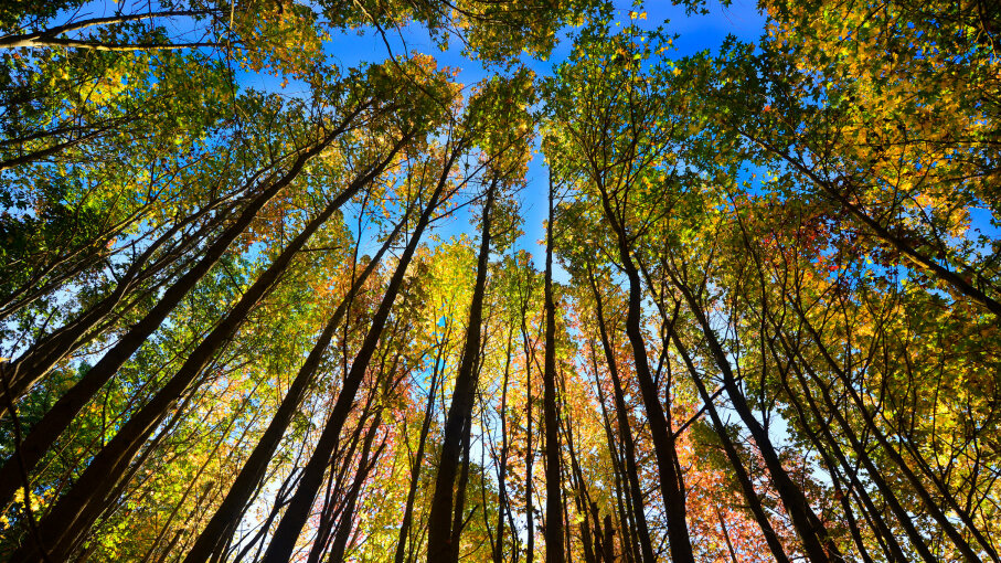 The autumnal equinox usually happens on Sept. 22 or 23. Lisa DuBois/Getty Images