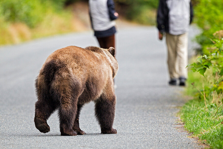 Running away from a hazard always seems like a good idea in the movies. But not so much in real life. See pictures of brown bears. © Fotofeeling/Westend61/Corbis
