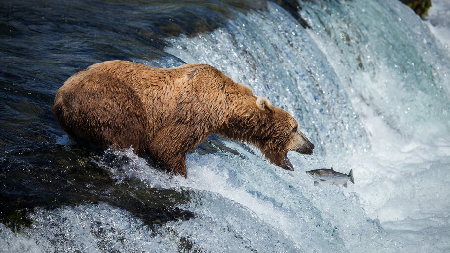 Dating Kodiak Alaska dejta någon din egen höjd
