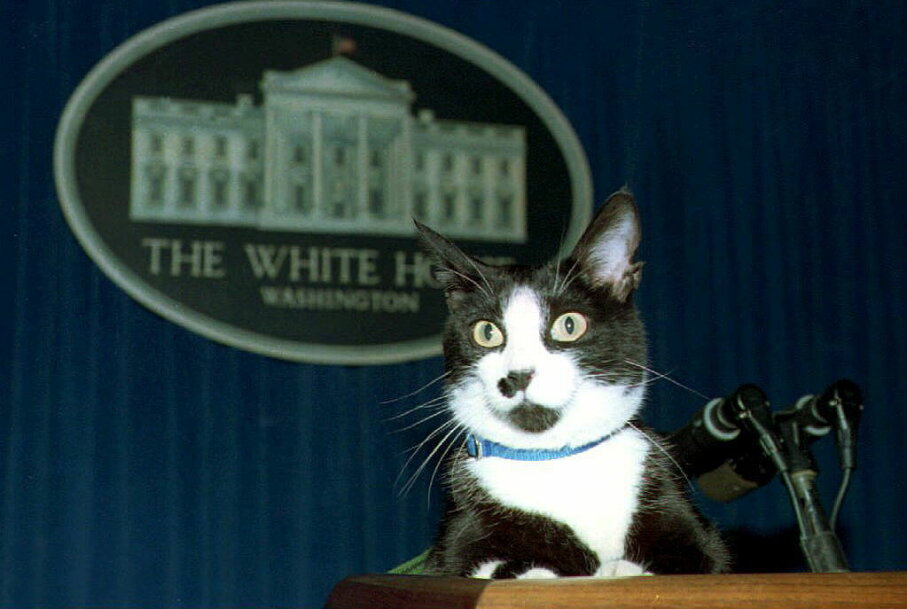 Socks for president? The Clintons' cat sits atop the podium in the White House press briefing room, 1994. JENNIFER YOUNG/AFP/Getty Images