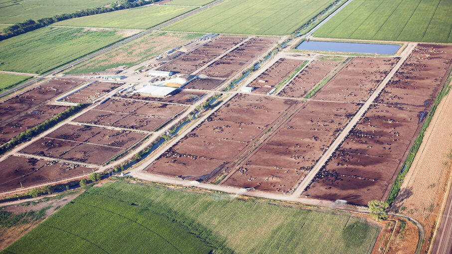 large cattle feedlot