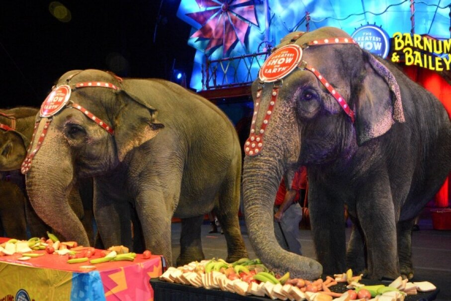 Elephants acts have been a part of the circus for years, but rising concern for the animals' safety has forced Ringling Bros. and Barnum & Bailey to retire the act within a few years. David A. Walega/FilmMagic/Getty Images