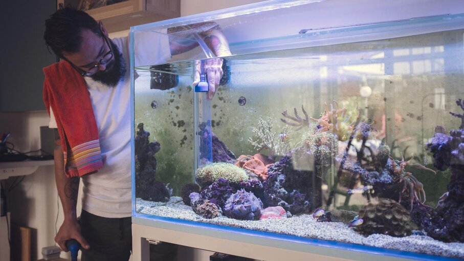Cleaning a saltwater aquarium involves cleaning the water and the contents of the aquarium after temporarily re-housing the fish. vgajic/Getty Images