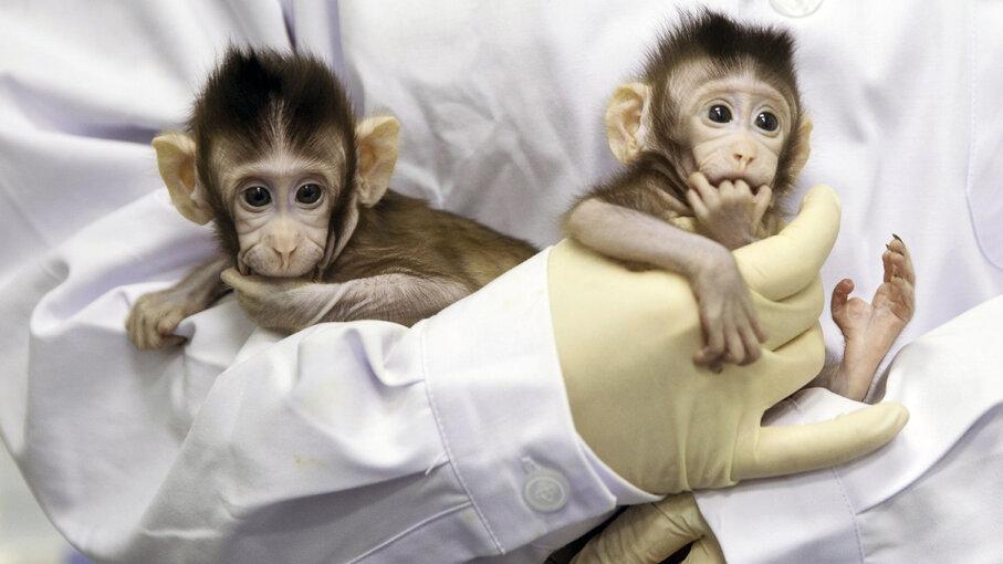 cloned monkeys Dolly method