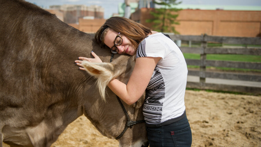 woman hugging cow