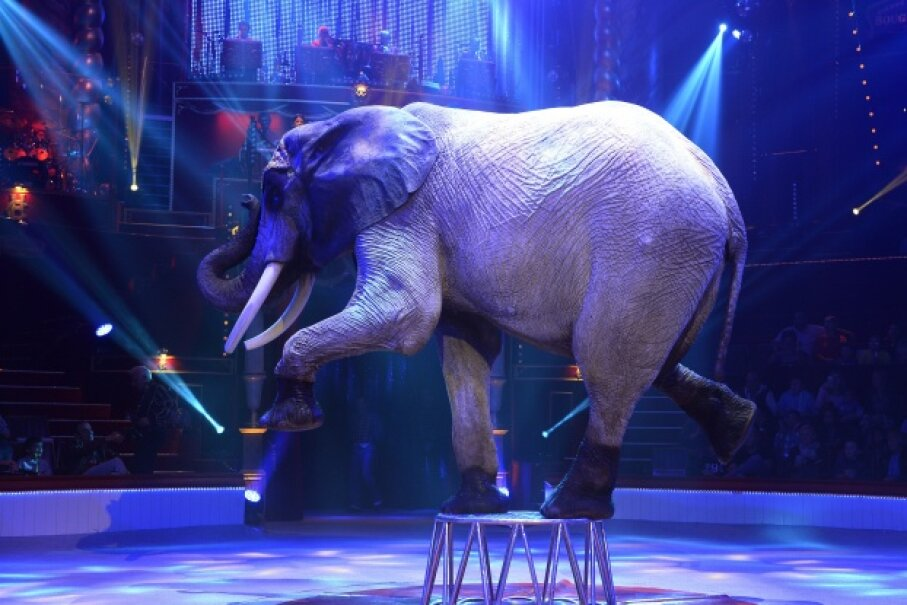 Elephant acts have created many controversies surrounding animal cruelty and human safety. BERTRAND GUAY/AFP/Getty Images