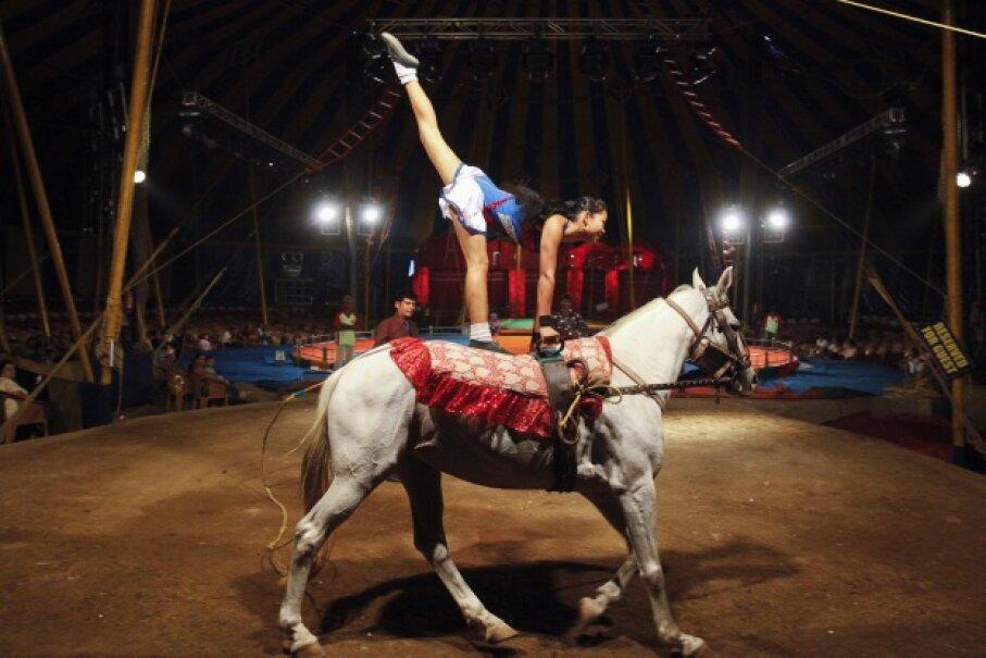 Balancing on a moving horse isn't an easy act. © VIVEK PRAKASH/Reuters/Corbis