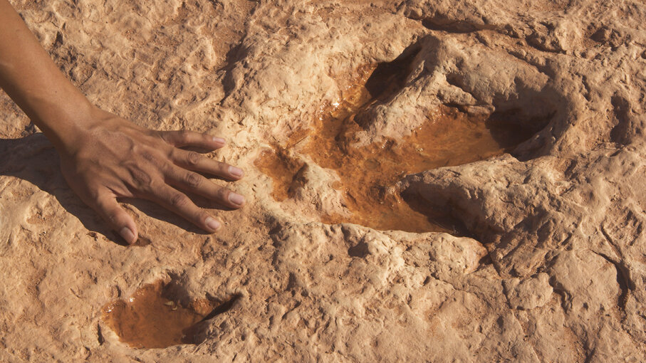 human hand next to dinosaur footprint