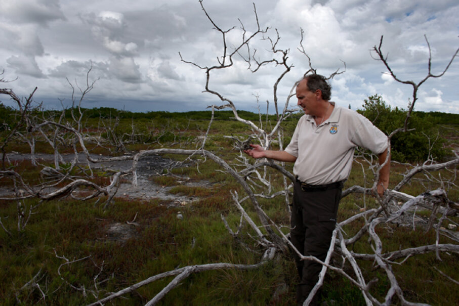 As sea levels rise scientists see changes in vegetation. U.S. government ecologist Phillip Hughes inspects dead buttonwood trees in Big Pine Key, Fla. as live mangrove trees grow nearby. The buttonwood has succumbed to salt water incursion. Joe Raedle/Getty Images