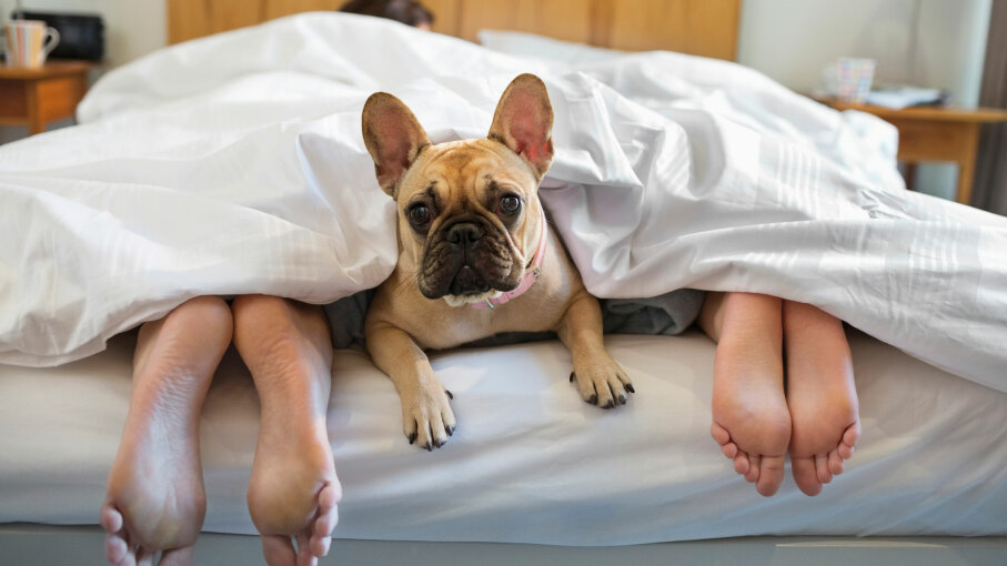 What's the sleep quality like when a pooch shares the bed? Robert Daly/Getty Images