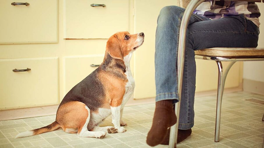 No Chocolate, No Avocado: 10 Foods Dogs Can't Eat | HowStuffWorks