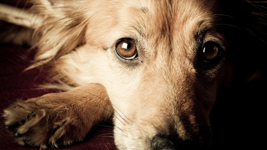Dog, empathy