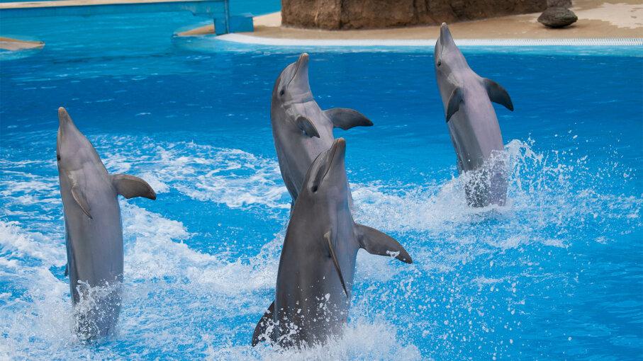 dolphin, tail walk