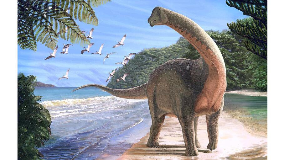 titanosaurian dinosaur Mansourasaurus shahinae