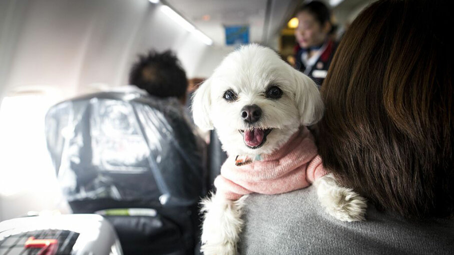 Japan Airlines charter flight