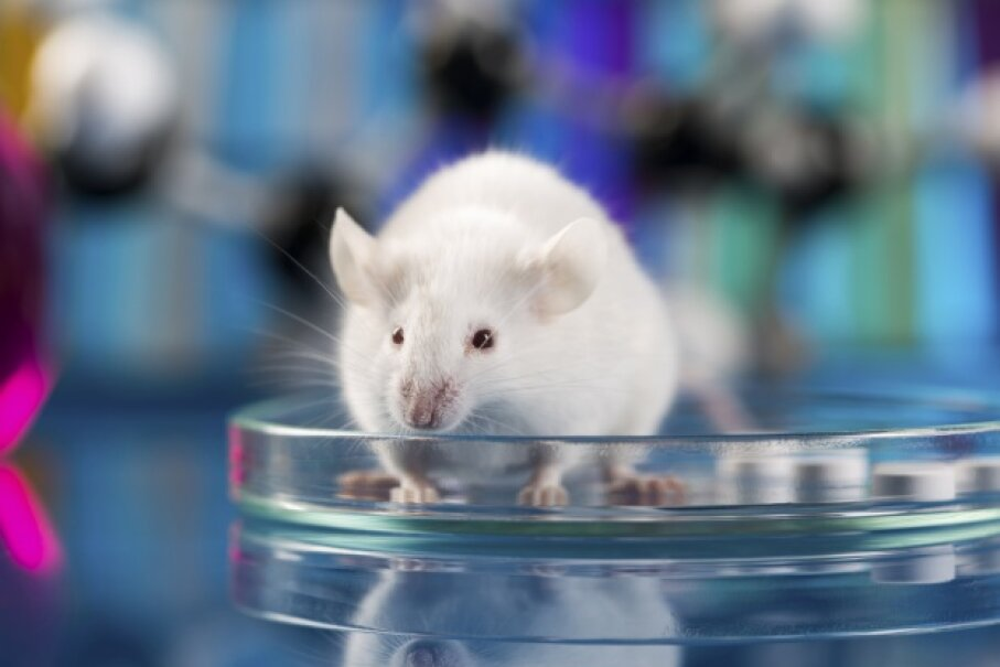 mouse and petri dish