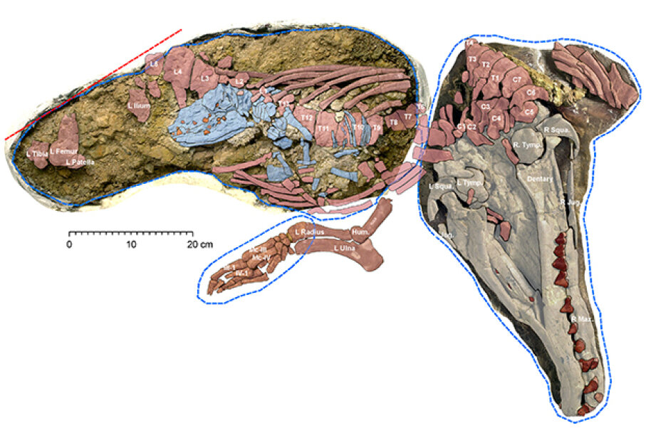This ancient mammal was discovered with a surprising addition: a fossilized fetus. University of Michigan/National Science Foundation