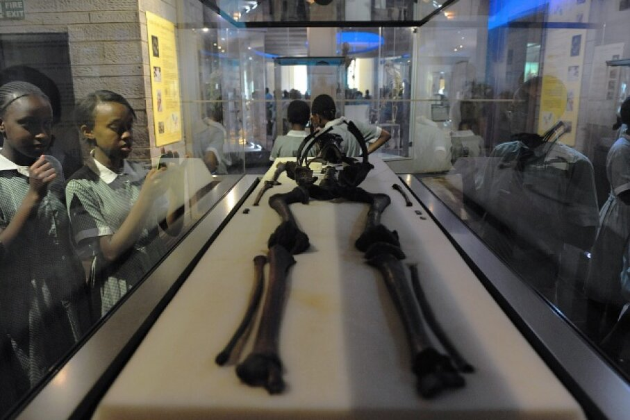 """Turkana Boy"" is the most complete example of the Homo ergaster species. His skeleton reveals that he walked upright and reached the height of modern humans. Tony Karumba/AFP/Getty Images"
