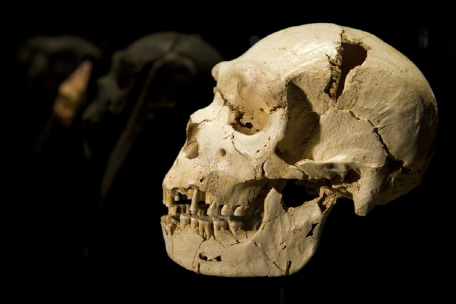 This hominid is likely our first cold-climate-dwelling ancestor. Felix Ordonez/Reuters/Corbis