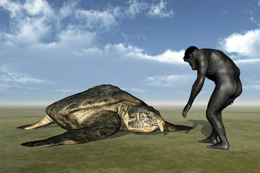 This drawing shows an artist's impression of the Archelon turtle; the Stupendemys is thought to be even bigger. MR1805/iStock/Thinkstock