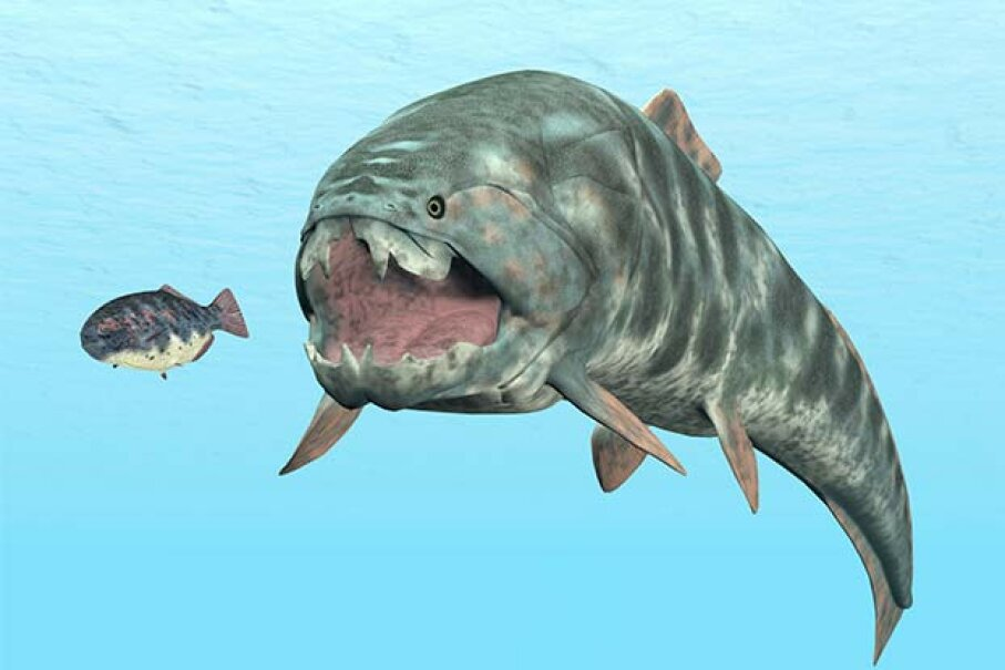 The Dunkleosteus had no teeth; it used two long blades to snap and crush its prey. MR1805/iStock/Thinkstock