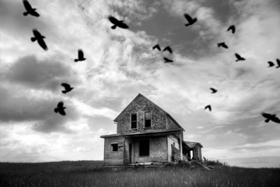 8: Birds In or Around Houses Spell Doom - 10 Superstitions