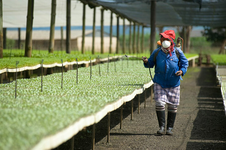 Although it is rare to see a woman working in pest control in the U.S., it's more  common in developing countries. Here, a South African woman sprays insecticide over cabbage seedlings. Emil von Maltitz/Getty Images