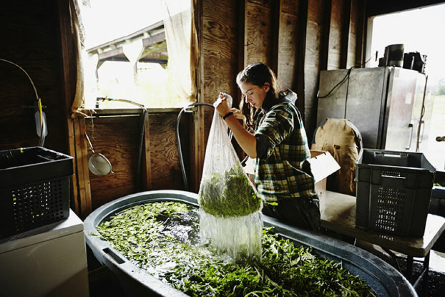 Sixty percent of the female farmers in the U.S. make less than $5,000 in annual sales. Only 3 percent of commercial farms are led by women. Thomas Barwick/Getty Images