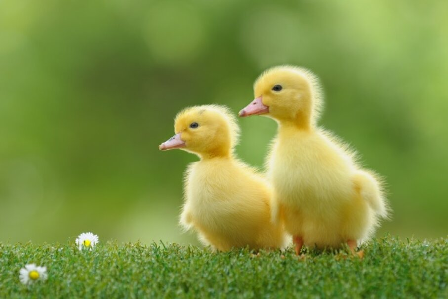 If you can't resist the urge to cuddle these guys, at least wash your hands after. iStockphoto/Thinkstock