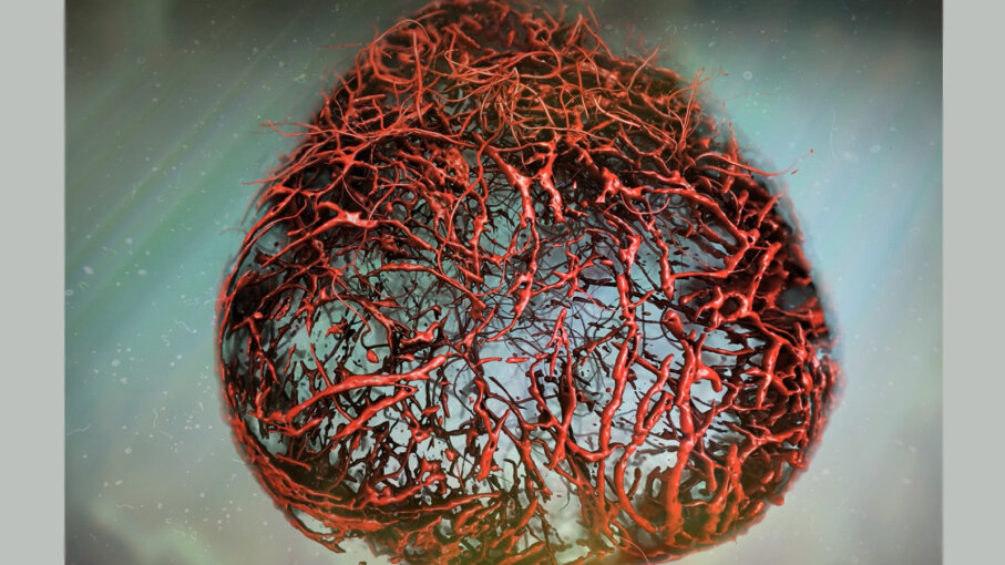 lab grown blood vessels