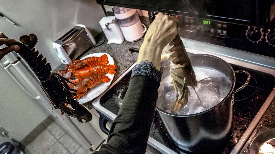 boiled lobster ban