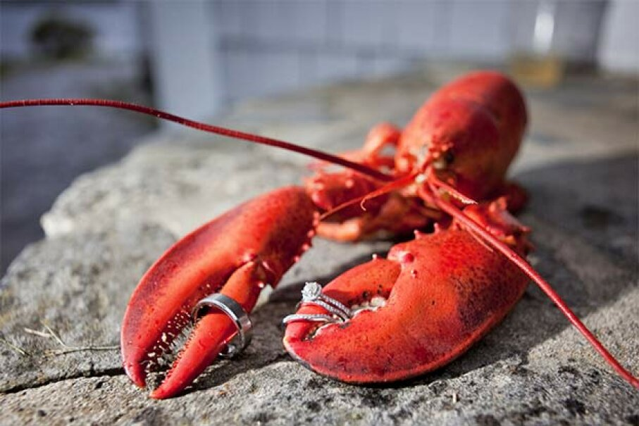 A lobster's dominant claw can be either on the right side or left side. Chris Bennett/Getty Images