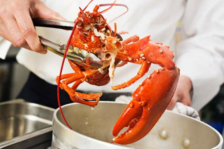 Lobsters have no vocal chords. The sounds your might hear coming from the cooking pot is air escaping from the lobster's shell. Nick Daly/Cultura/Getty Images