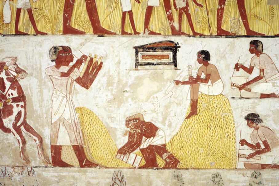 This fresco from the tomb of Menna, from the XVIII dynasty of Amenhotep III (1402-1364 B.C.E.) shows some corn being reaped. Corn has been genetically modified for thousands of years. DeAgostini/Getty Images