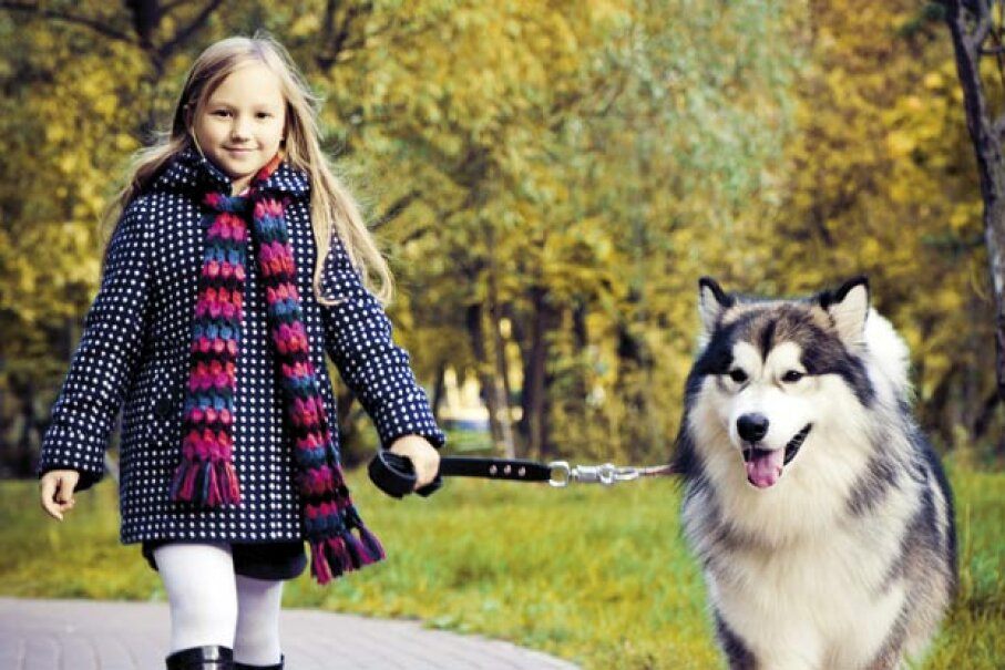 If you're planning to get into the dog-walking business, check with the dog's owners that their pet in kid-friendly. Maria Pavlova/Vetta/Getty Images